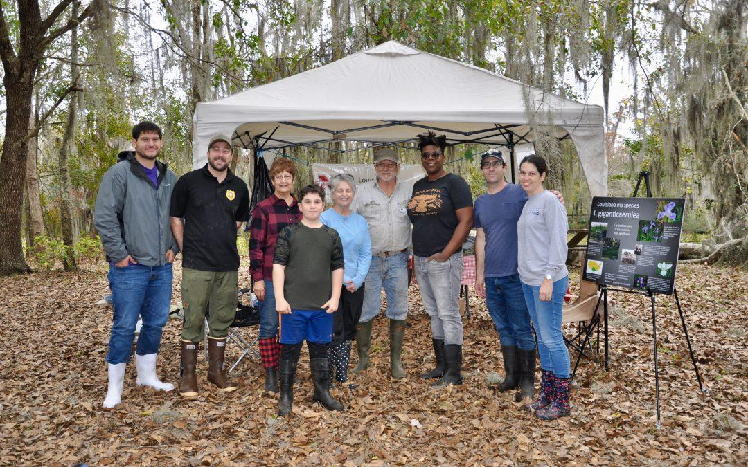 Town of Jean Lafitte and Iris Society plant over 1,000 irises